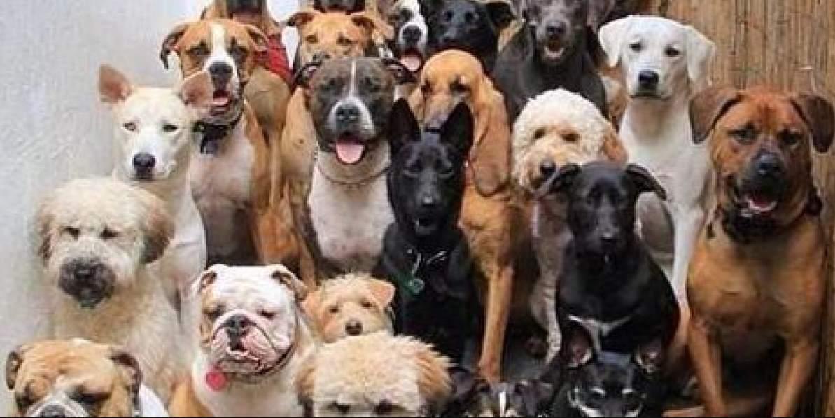 Veterinarios prevén aumento de abandono de perros ante crisis del Covid-19