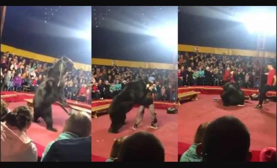 En pleno espectáculo, oso ataca a su domador
