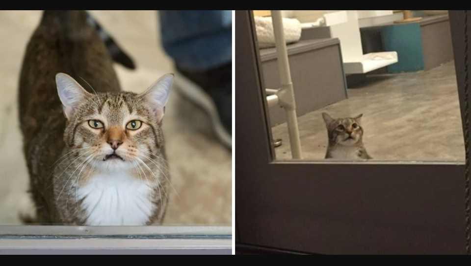 Castigan al gatito Quilty por dejar escapar a otros animales de albergue