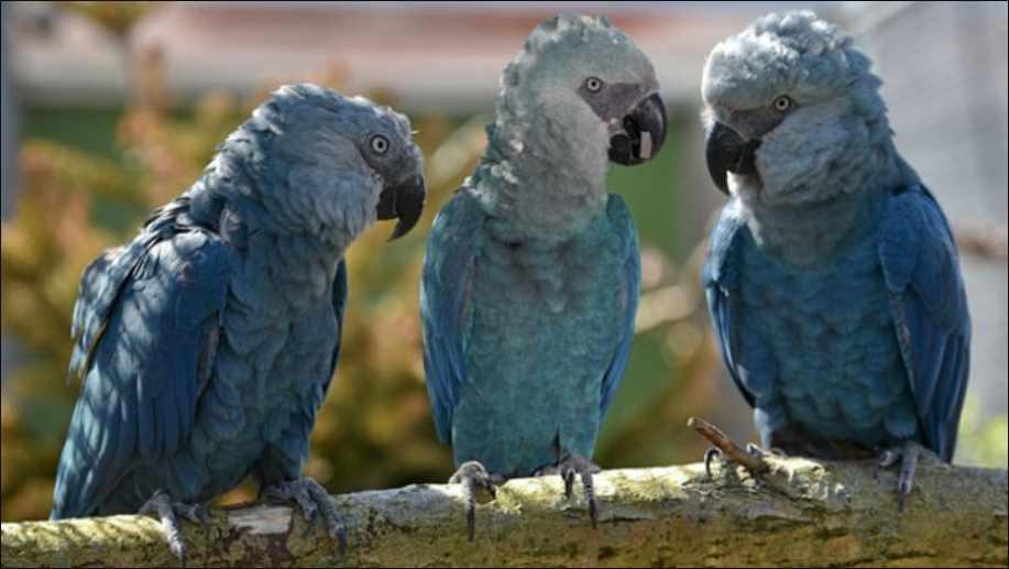 Los animales conversan entre ellos y respetan el turno de palabra