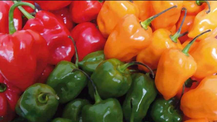 ¿Haz probado el chile canario o manzano? dicen que es saludable
