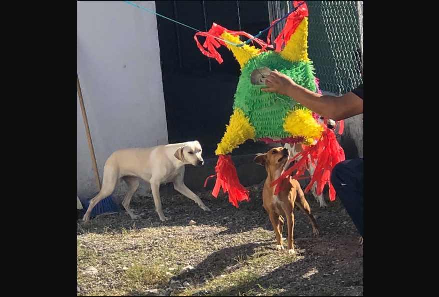 Perritos rescatados celebran posada con piñata y comida especial en Tamaulipas