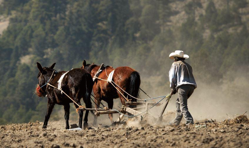 Fortalecen esquema de Precios de Garantía para pequeños productores de granos básicos