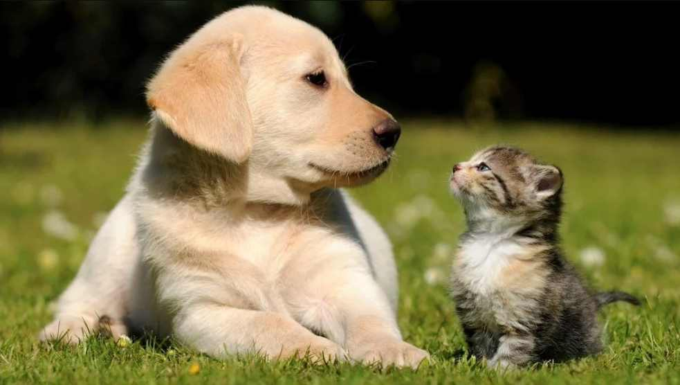 Coronavirus: ¿Mascotas pueden transmitir la peligrosa enfermedad?