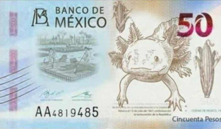 El ajolote será la nueva imagen del billete de 50 pesos
