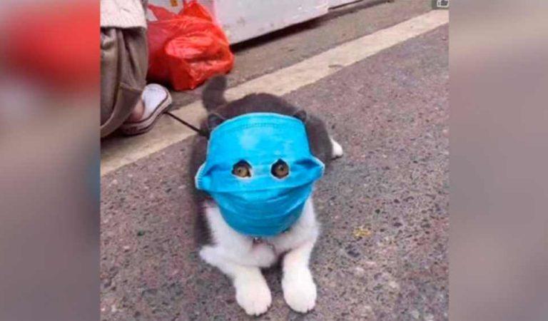 Gato con cubrebocas se vuelve viral en redes sociales; dueño lo protege contra coronavirus