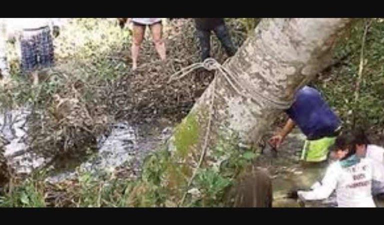 """Sigue el horror en Verarcruz: encontraron 12 """"cocinas"""" para disolver cadáveres en ácido"""