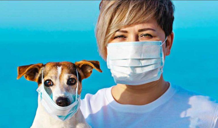 Perros y gatos no contagian coronavirus: OMS