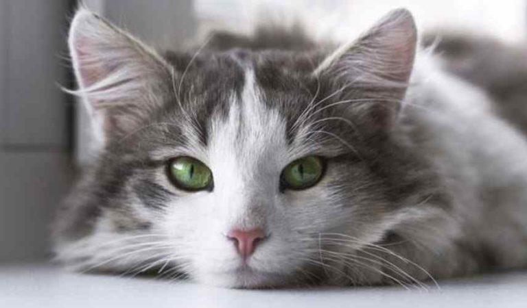 Mujeres pisan sin piedad a gatito hasta matarlo (IMÁGENES FUERTES)