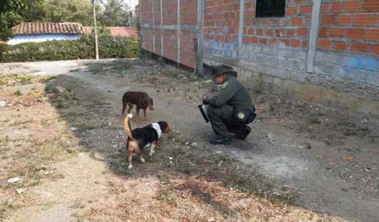 Policías alimentan e hidratan a perros de la calle durante la cuarentena