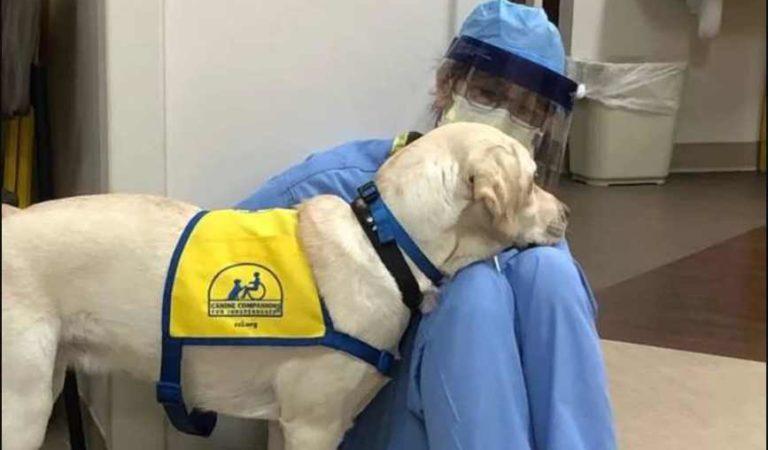 Perrito reanima a personal médico que lucha contra el coronavirus en EU
