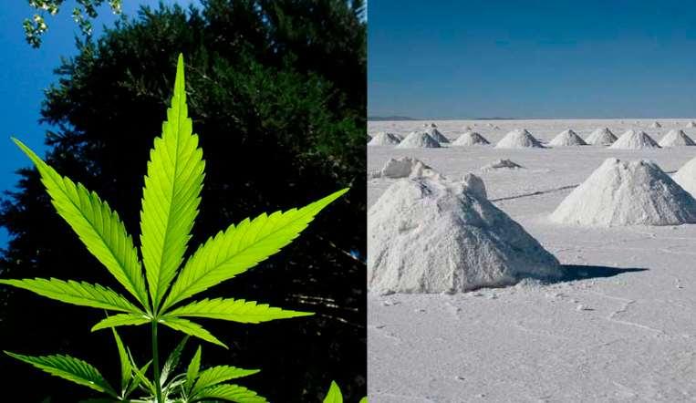 La marihuana podría ser mejor batería que el litio