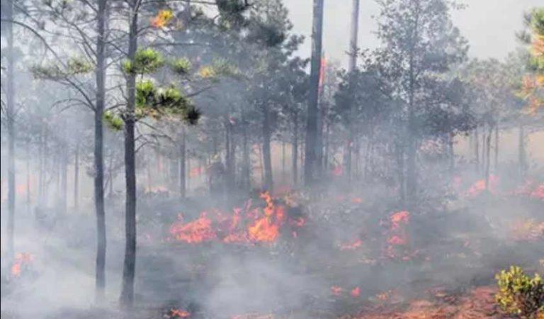 Conafor registra 61 incendios activos; han afectado a 9 mil 166 hectáreas
