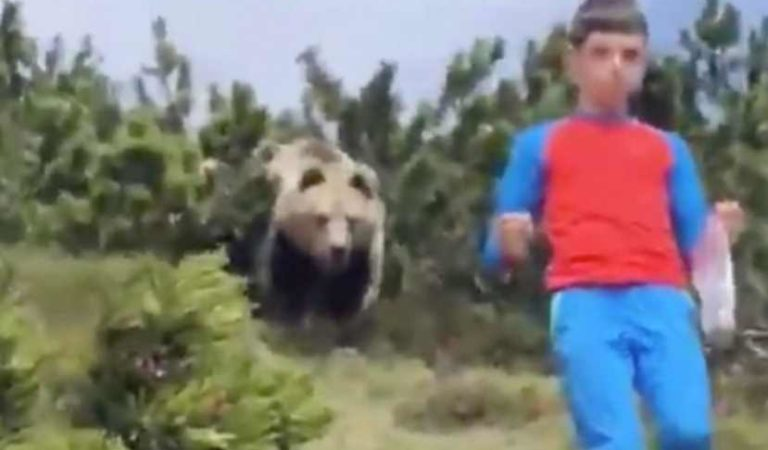 Enorme oso persigue a niño en municipio de Italia; logra escapar | VIDEO