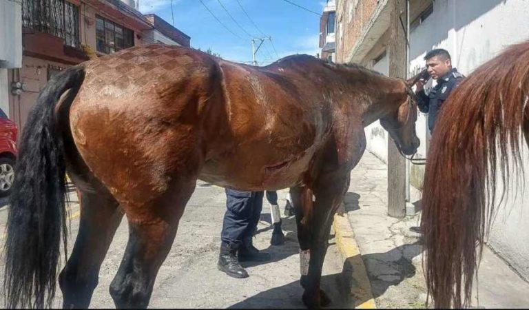 Muere niño de 9 años al ser arrastrado por un caballo; sufrió fractura de cráneo