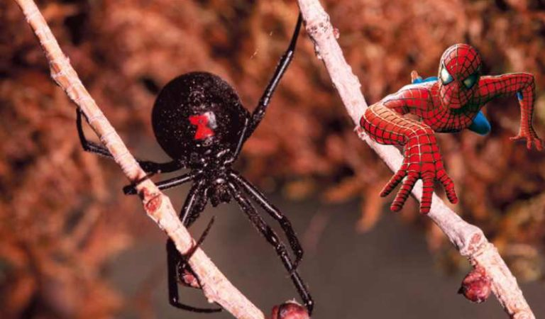 Tres niños se dejan picar por una viuda negra para convertirse en Spider-Man