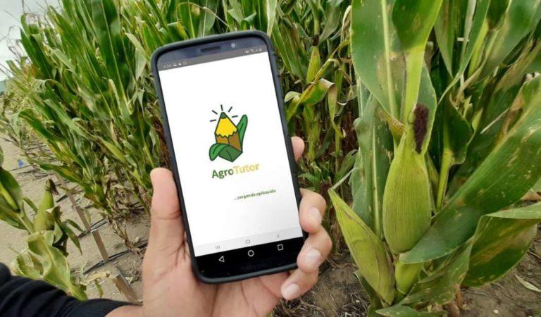 Otorgan reconocimiento internacional a aplicación mexicana sobre producción de maíz