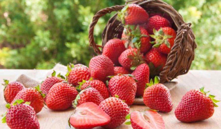 Las fresas contienen antioxidantes, minerales y ácido fólico que es ideal en el embarazo