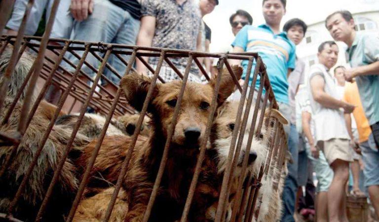 China elimina oficialmente a perros y gatos de la lista de animales comestibles