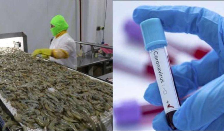 China suspende importación de camarones provenientes de Ecuador; detectan COVID-19 en envases