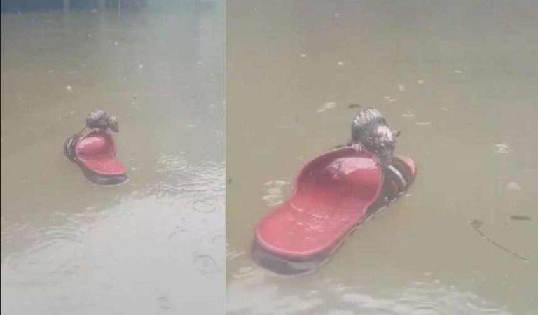 Como en Titanic: rata se salva de morir ahogada subiendo a sandalia en NL