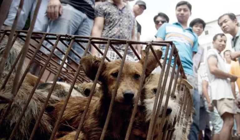 Corea del Norte estaría comprando perros con más de 15 kilos para abastecer restaurantes