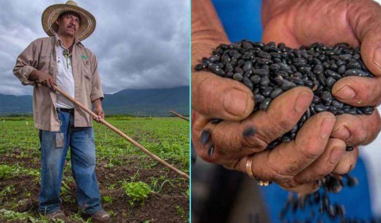 Gobierno de AMLO desarrolla súper frijol para campesinos del sureste de México