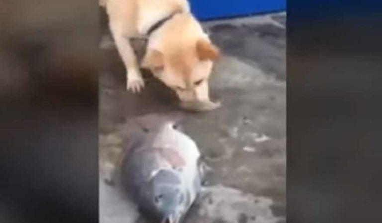 Perrito busca desesperadamente salvarle la vida a un grupo de peces sin agua | VIDEO
