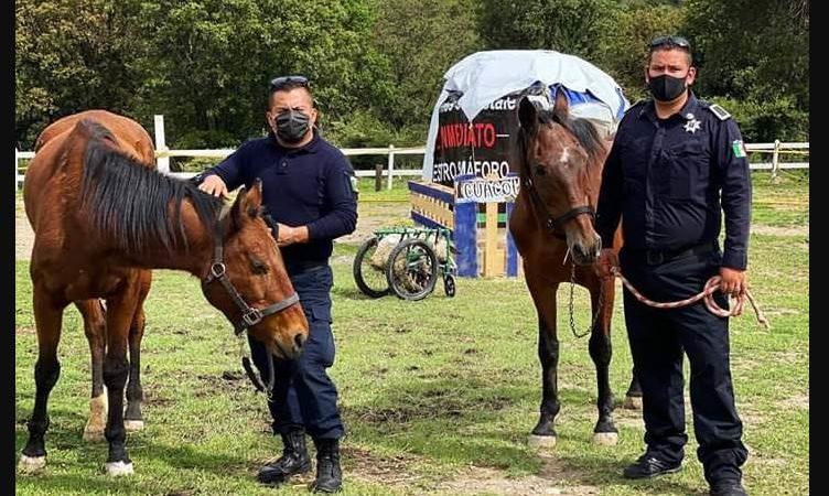 Ecatepec: trasladan a santuario a caballos rescatados que sufrían maltrato