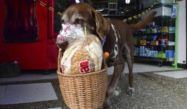 Ladrones asaltan a perrito, en un descuido lo despojaron de canasta