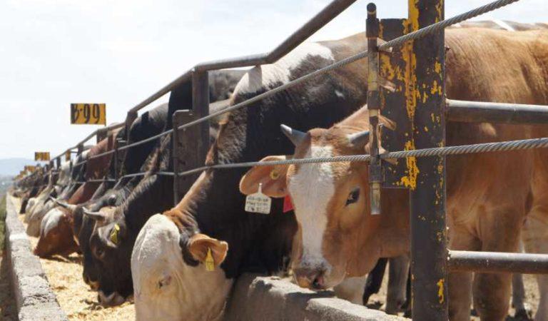 Gobierno de AMLO logra que ganaderos de Zacatecas exporten carne de res a China