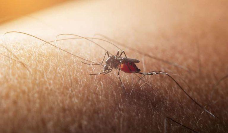 Peligrosa enfermedad transmitida por mosquitos amenaza a Estados Unidos