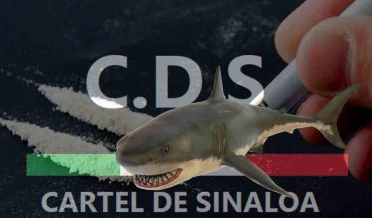 Cártel de Sinaloa trasladó cocaína en tiburones y rellenados con la droga; sacrificaron a miles