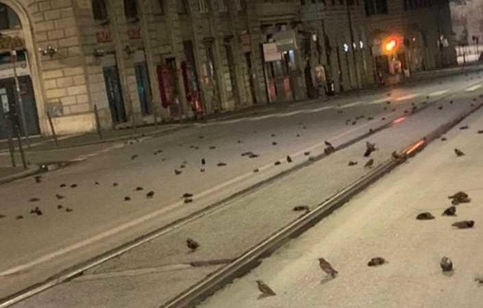 Aves caen muertas en Roma; mientras se celebraba el año nuevo | VIDEO