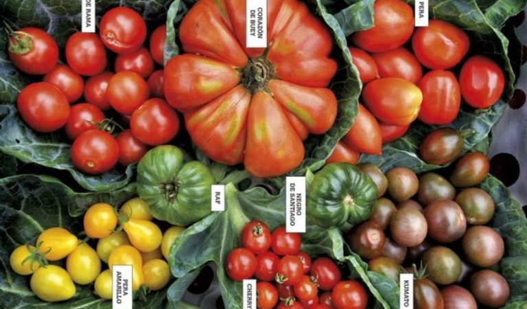¿Conoce todos los beneficios de comer tomates?