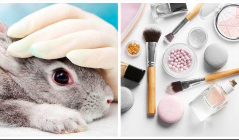 Diputados prohíben pruebas cosméticas en animales; no se podrán fabricar, importar ni comercializar