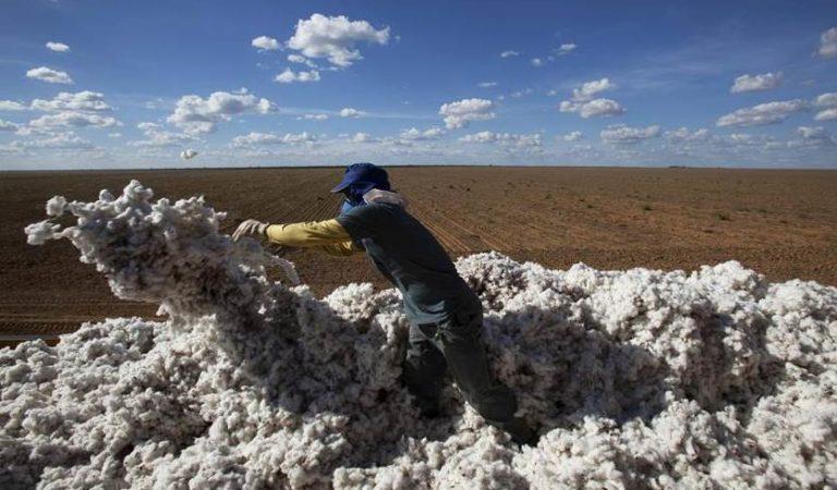 Se disparan precios y consumo de algodón en 2021 y 2022