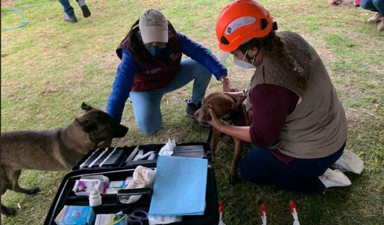 Logran rescatar a perritos de socavón; minutos después se desprendió otra parte | Fotos